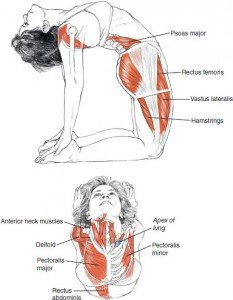 Postura del cammello-3