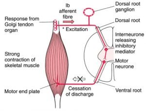 Tono muscolare