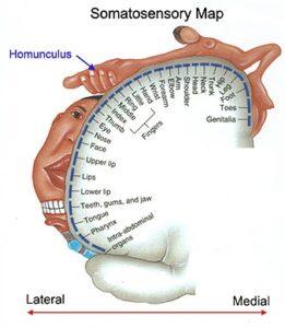 Body schema