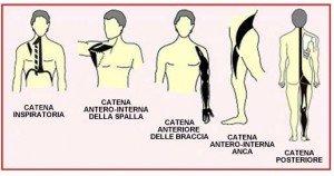 Catene Cinetiche Muscolari