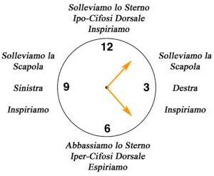 clock dorsale su fitball