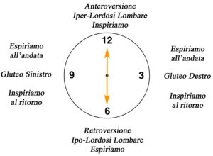 clock semicirconferenza lombare su Fitball