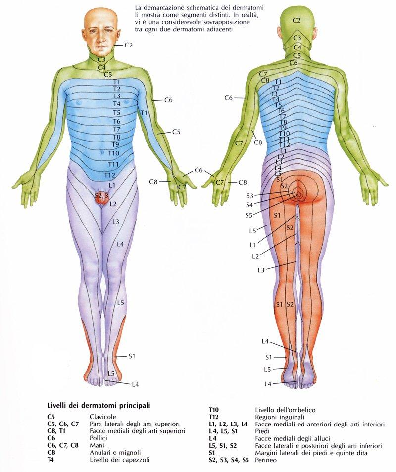Gambe di crampi e i danni del collo