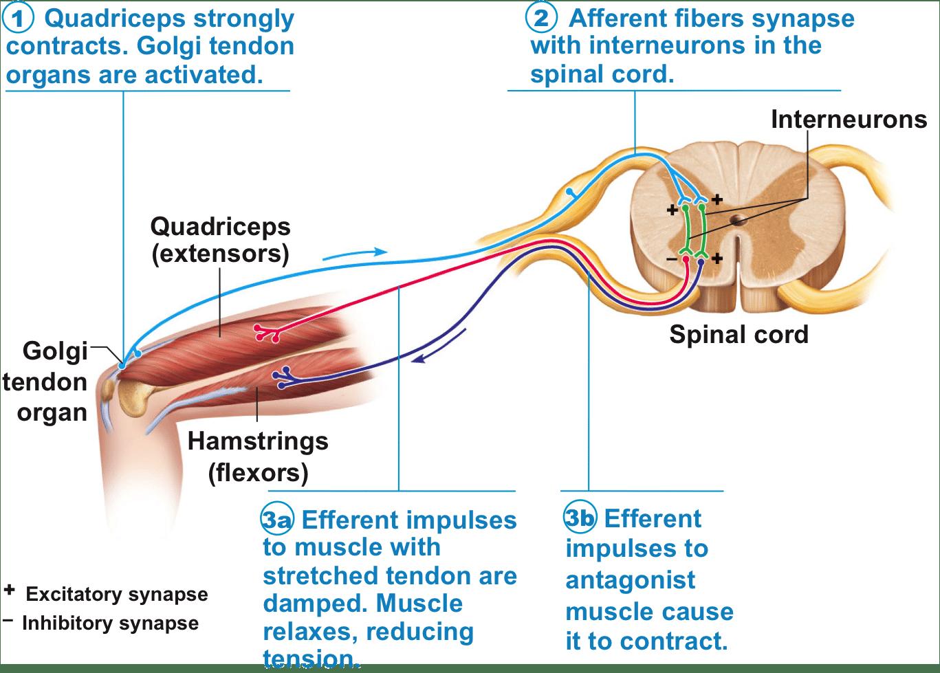 Penis enlargement surgery in dubai
