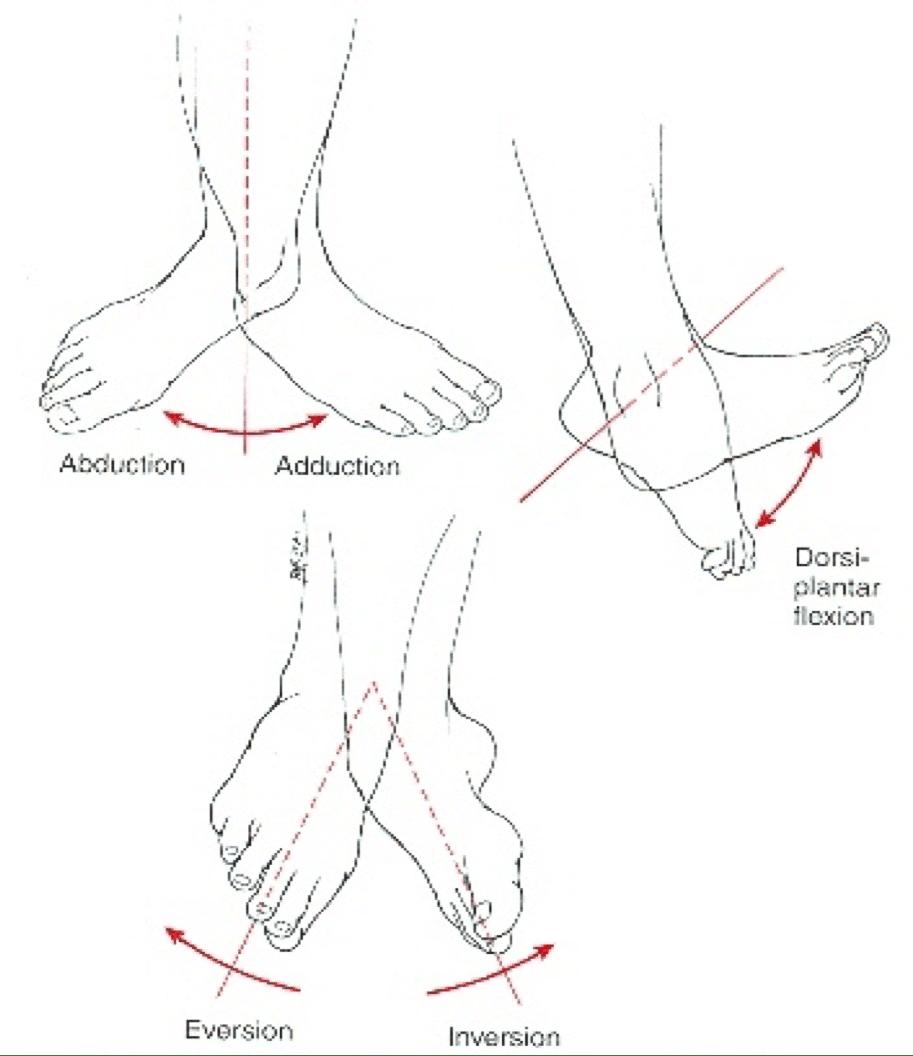 Piede e Postura 3