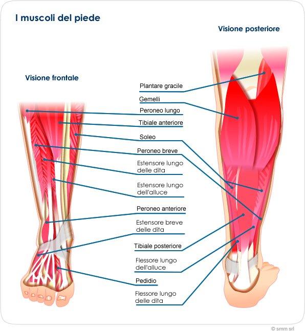 Piede e Postura 6